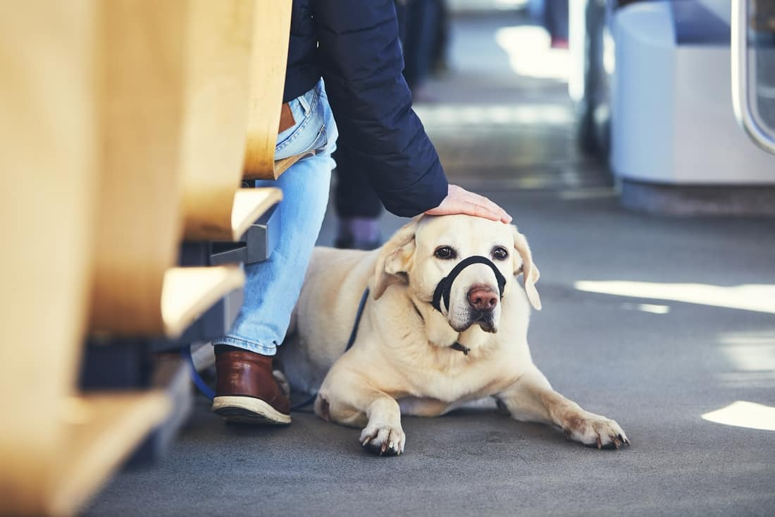 How to travel with pets by bus